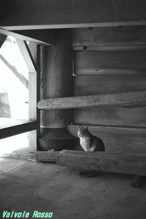 ネガフィルムスキャン 野良猫写真
