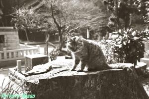 銀塩フィルムによる野良猫写真