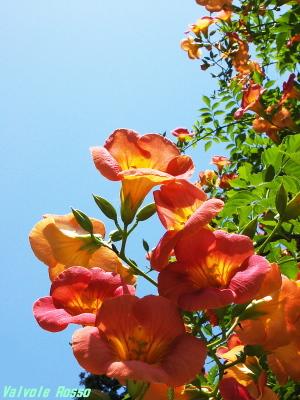 パナソニックLUMIX F7 で撮影した花の写真