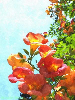 LUMIX F7 で撮影した花の写真を水彩に変更