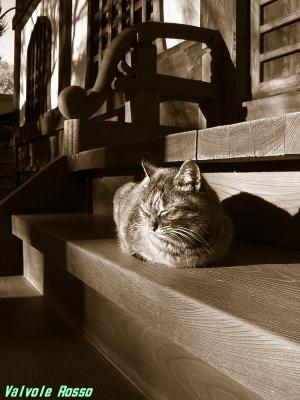 コンデジで撮ったニャンコ 温黒調モノクロ写真