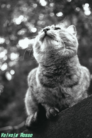 ノラネコ写真 サンプル