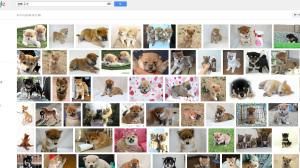"""画像検索 """"豆柴 子犬"""""""