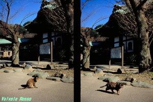 OLYMPUS PEN EES-2 FUJICHROME Velvia100 [RVP100] 撮影地:鎌倉