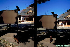 OLYMPUS PEN EES-2 FUJICHROME Velvia100 [RVP100] 撮影地:鎌倉 Kodak Photo CD にてデジタル・データに変換