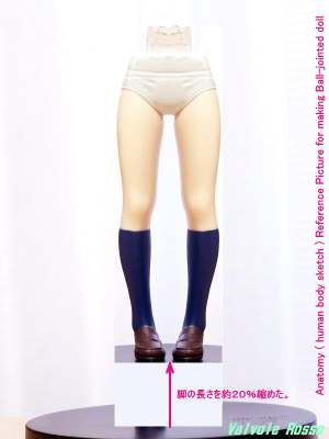 Anatomy ( human body sketch ) Reference Picture for making Ball-jointed doll (およそ20%くらい脚を短くしてみた!)