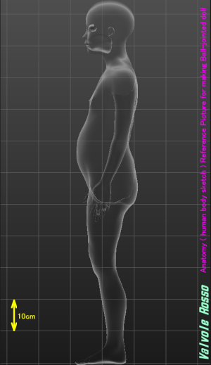 MakeHuman 1.1.1 「モデルちゃん11才」 《側面透視図・ボディ断面》 球体関節人形の設計図を描く際の参考資料です。
