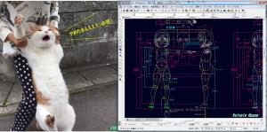 ハッシュタグ「#捕獲萌え」の猫、茶色さんの写真。なんかジワジワくる。