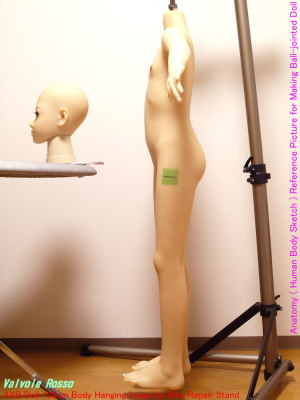 AXB Doll 136cm Body Hanging Image by Bike Repair Stand Anatomy ( Human Body Sketch ) Reference Picture for Making Ball-jointed Doll